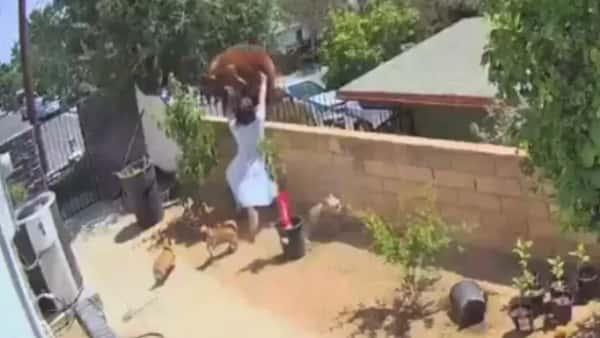 Video: la lucha entre una mujer y un oso para defender a su perro