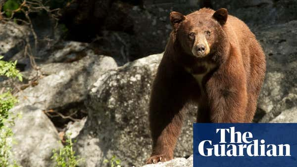 California teen who shoved bear to save dogs: 'I didn't know I had it in me'