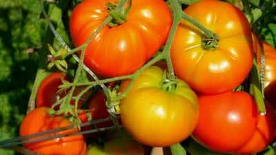 Руководство по выращиванию овощей