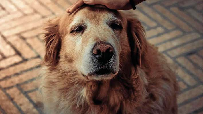 Older dogs need special care: What to consider for 'senior' pet