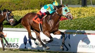 No surprise: Maker loaded for graded turf stakes Saturday at Gulfstream.