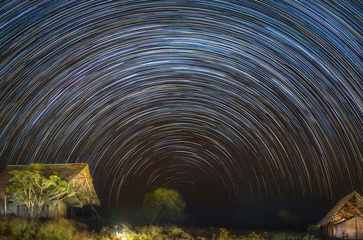 Animals can navigate by starlight. Here's how we know.